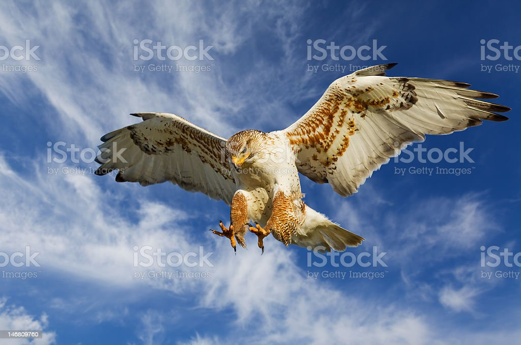 Ferruginous attack stock photo