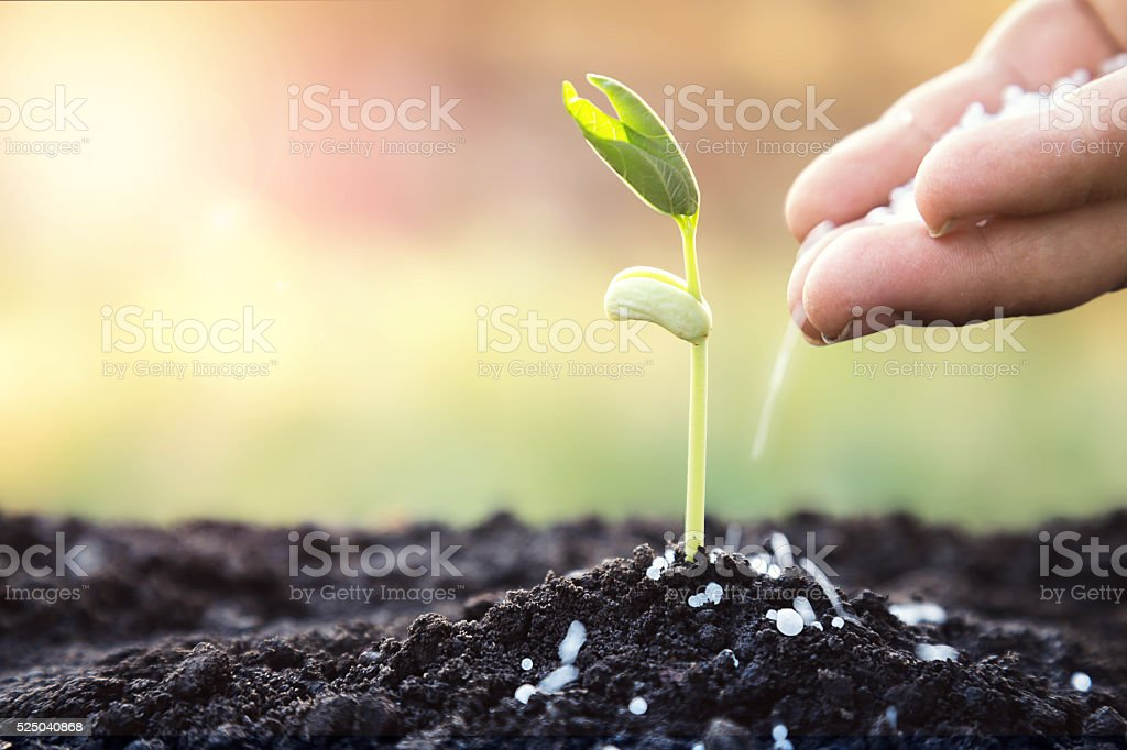 fertilizer to young tree stock photo