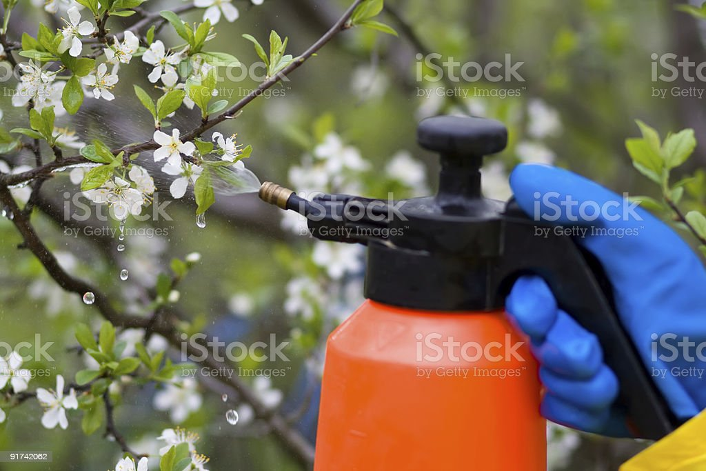 fertilizer trees royalty-free stock photo