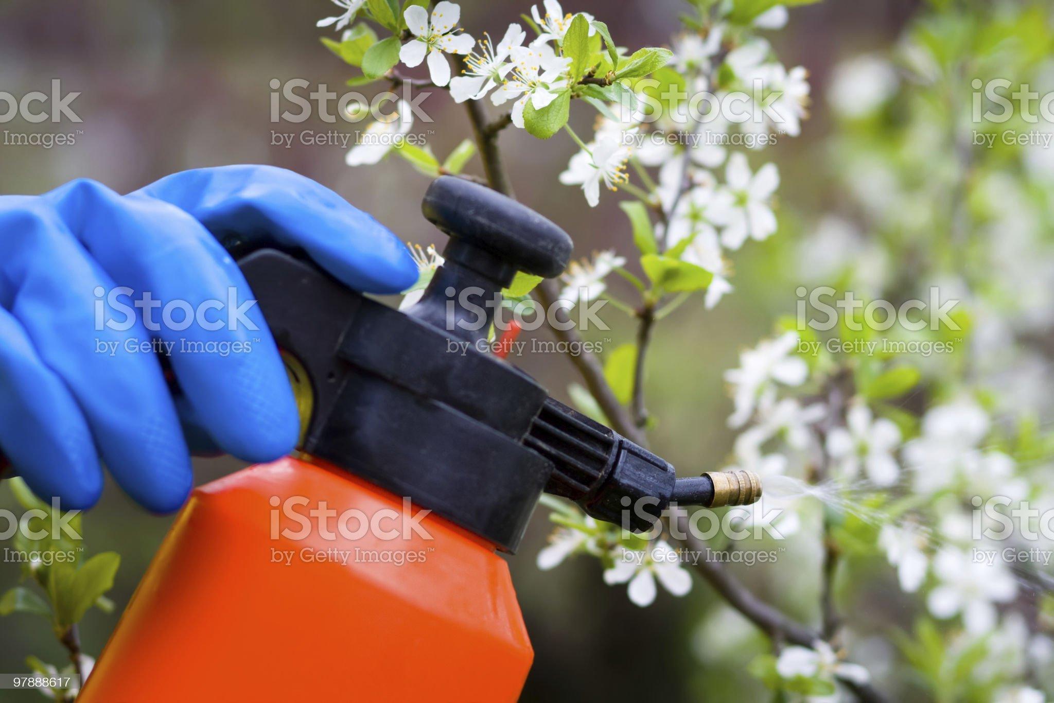 fertilizer trees royalty-free stock photo