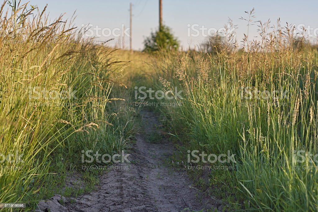 fescue and brome near dirt road on field stock photo