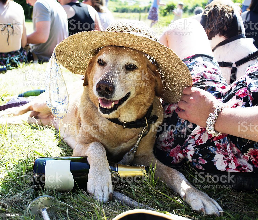 Festival Dog wearing a hat stock photo
