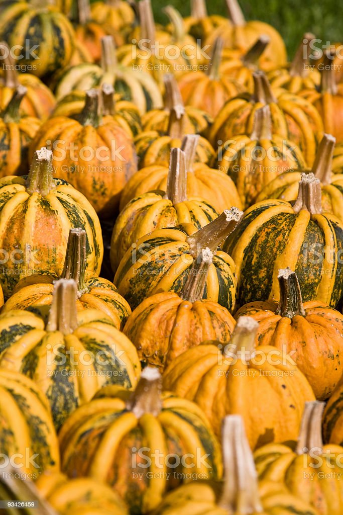 festival pumpkins stock photo