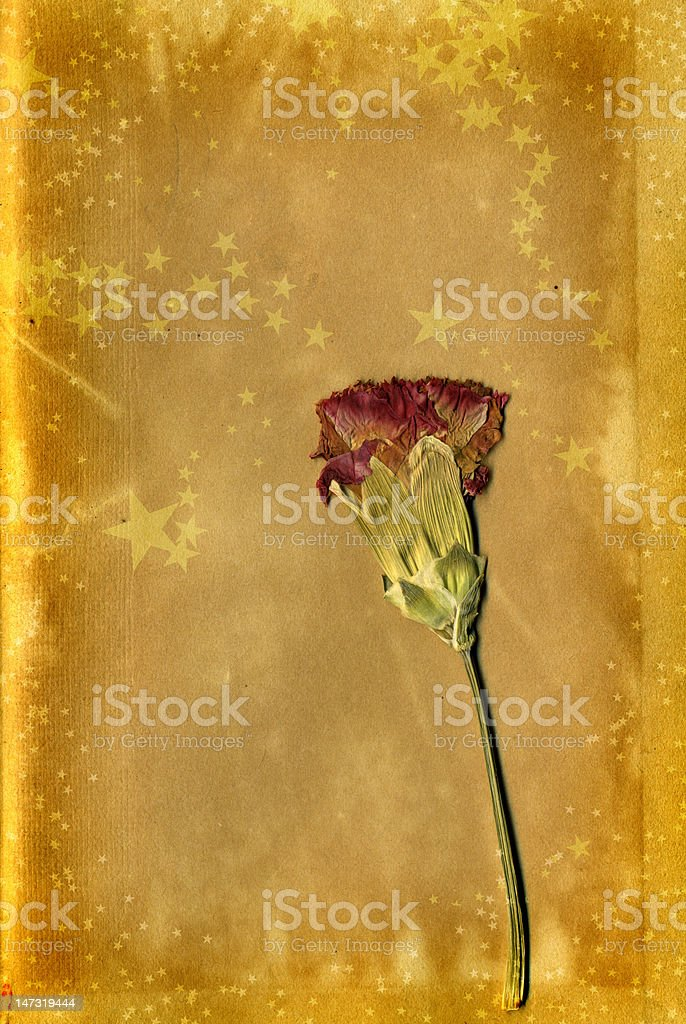 Festive Party Christmas Card background with Pressed flower stock photo