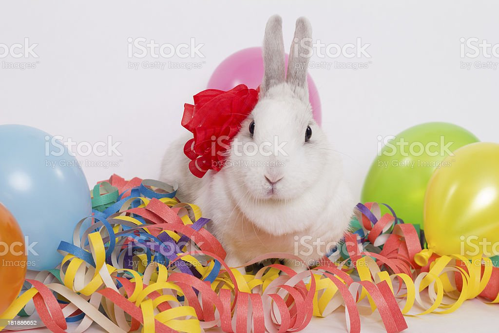 festive rabbit royalty-free stock photo