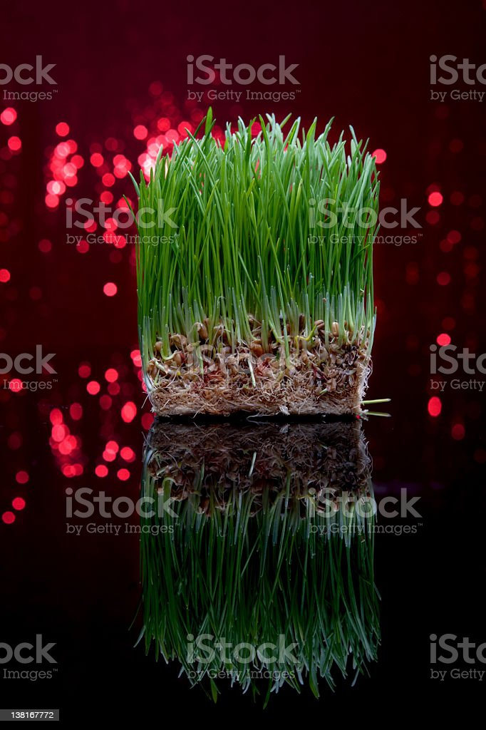 Festive wheat grass royalty-free stock photo