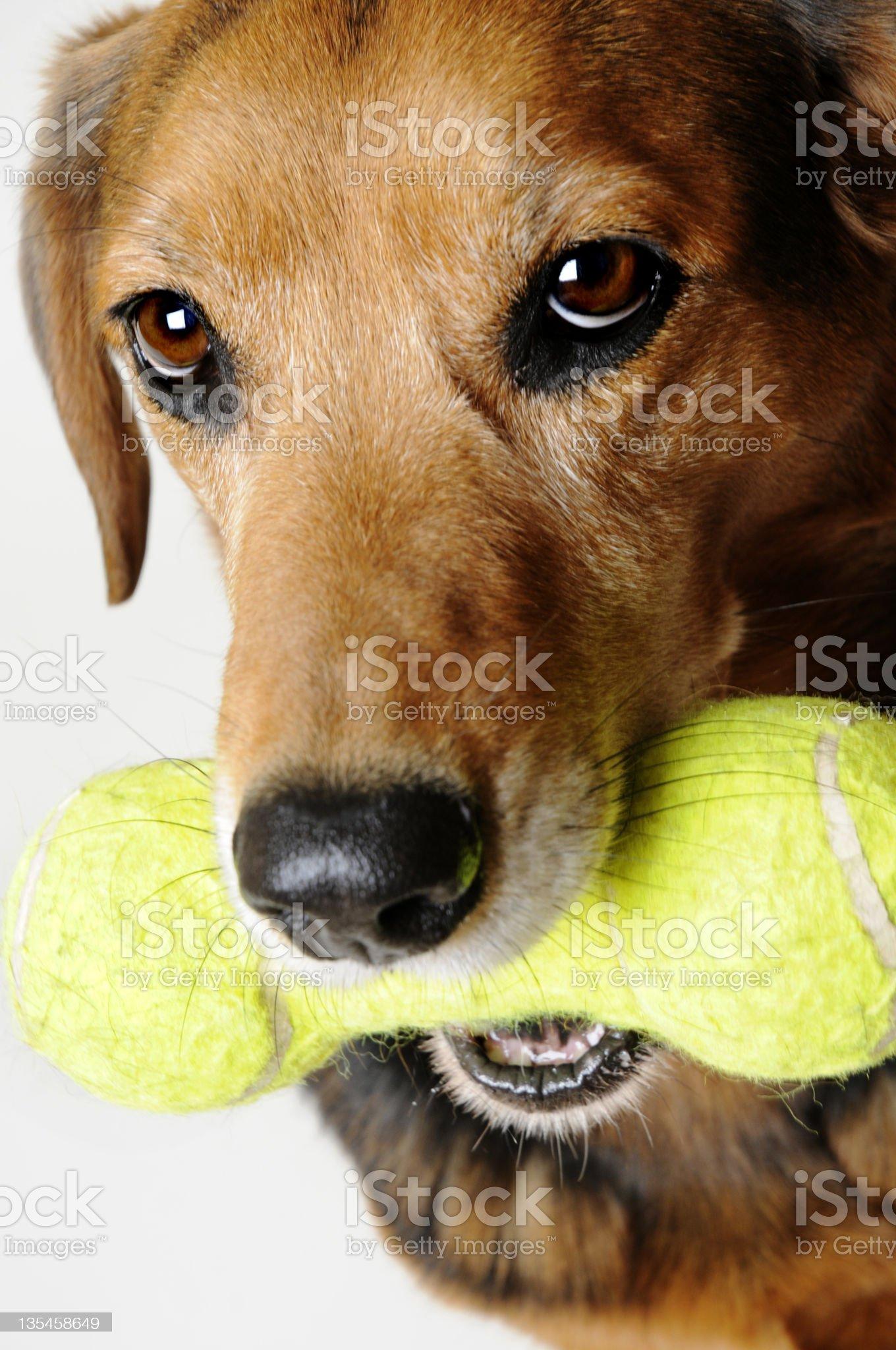 Fetch royalty-free stock photo