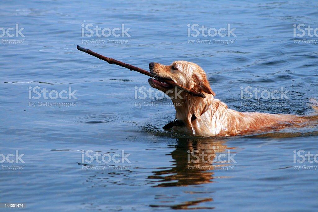 Fetch stock photo