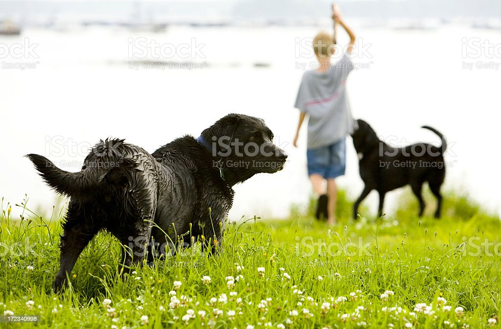 Fetch royalty-free stock photo