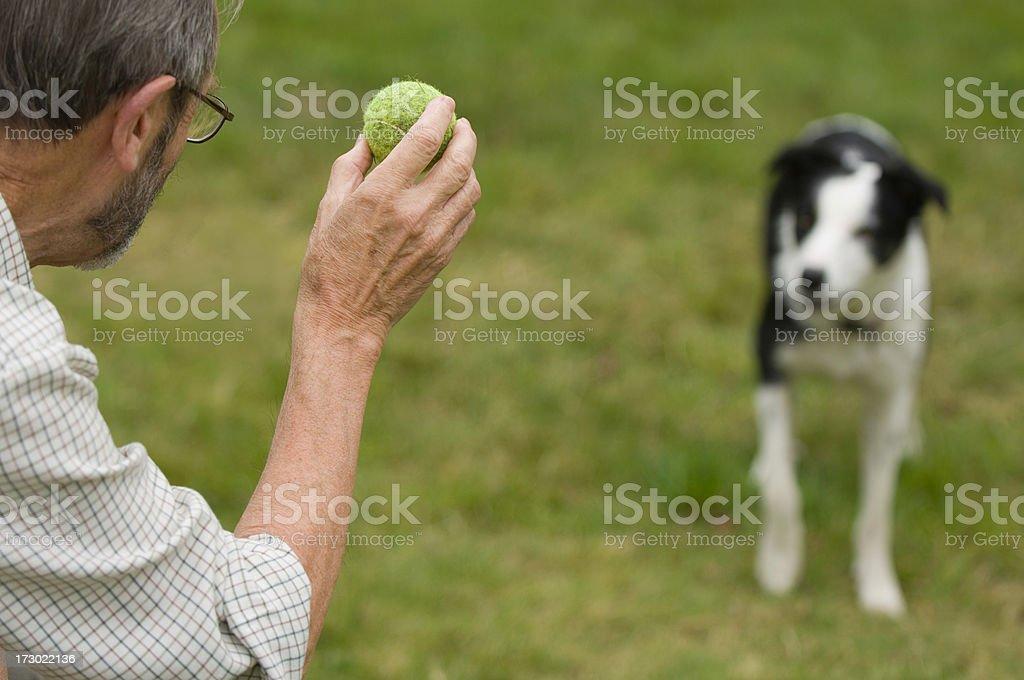 Fetch! royalty-free stock photo