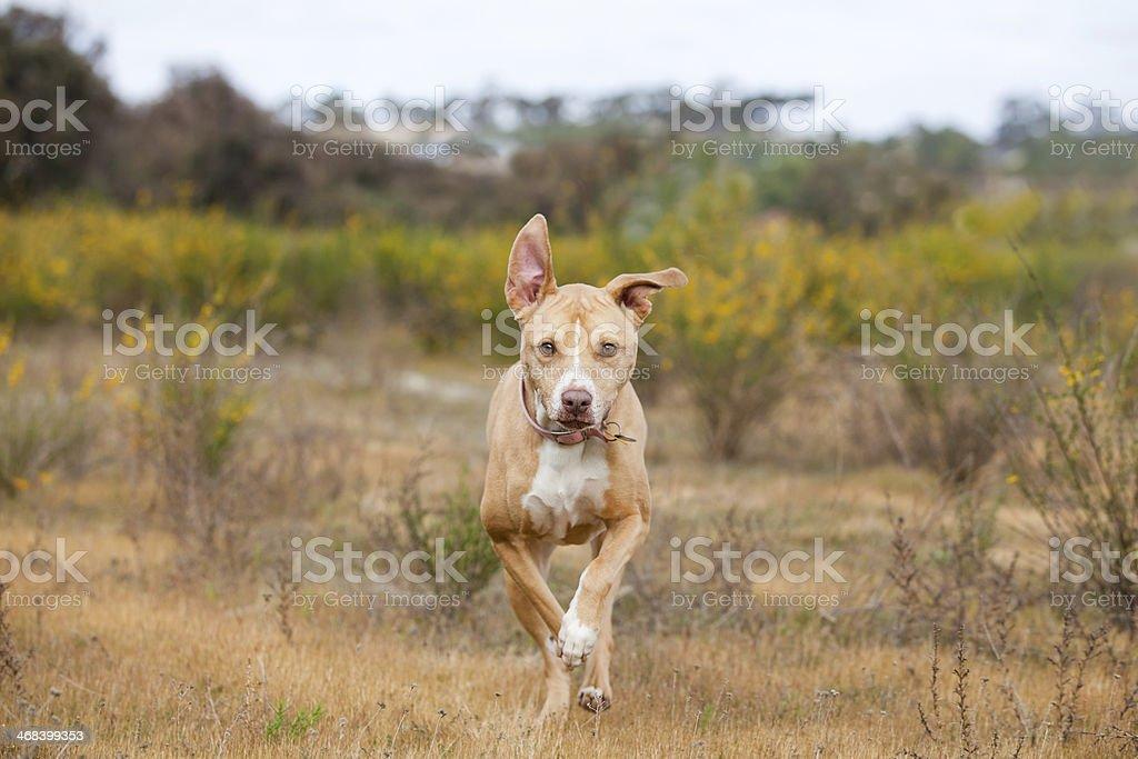 Fetch! stock photo