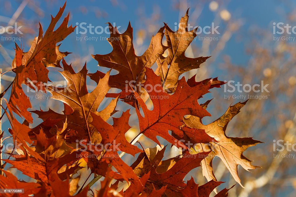 feuilles d'automne stock photo