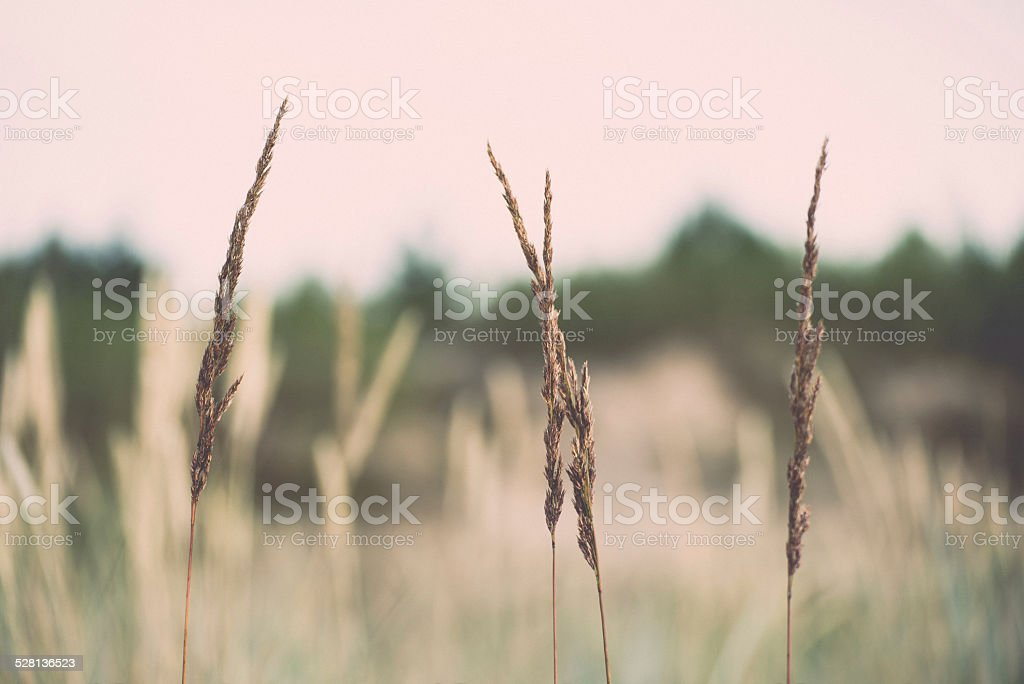 few bents on blurred background. Vintage. stock photo