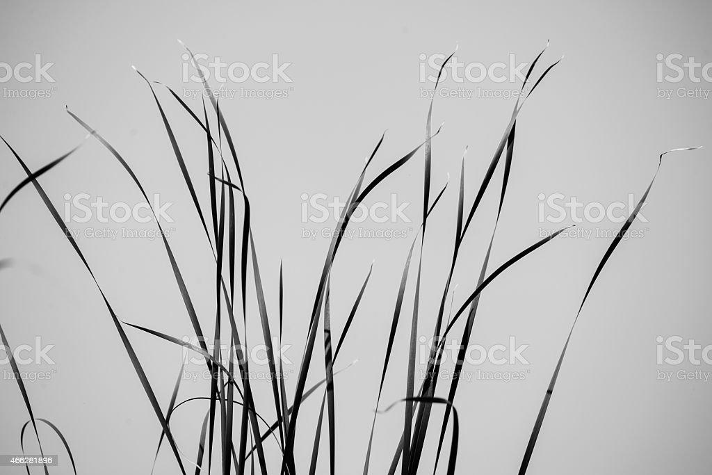 few bents on the blue sky background - monochrome stock photo