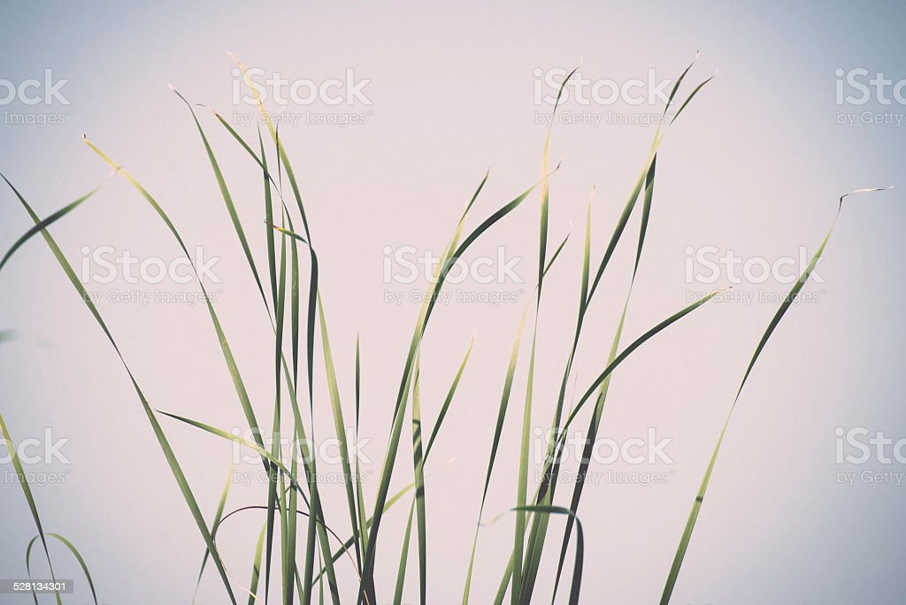 few bents on the blue sky background. Vintage. stock photo