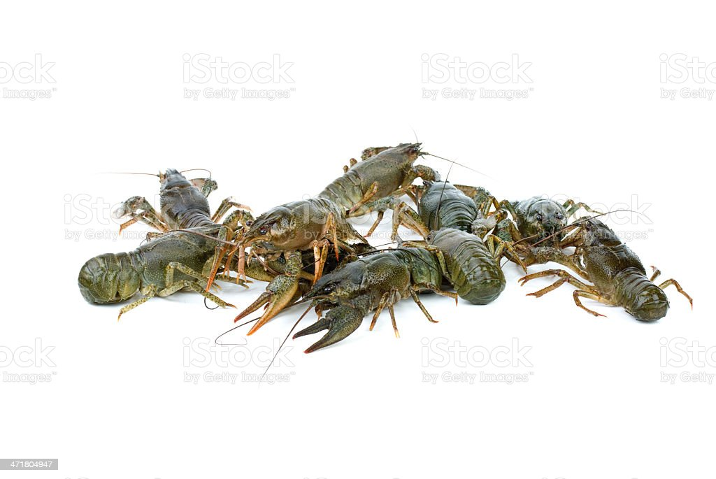 Alguns crawfishes foto de stock royalty-free