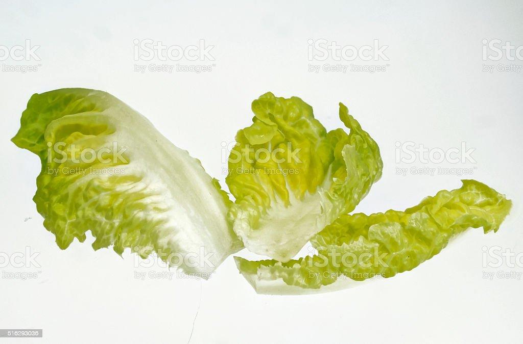 few leaves romaine lettuce Cut stock photo