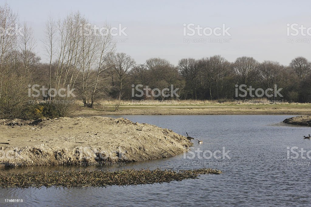Bare landscape for Canada goose pair Branta canadensis after des stock photo