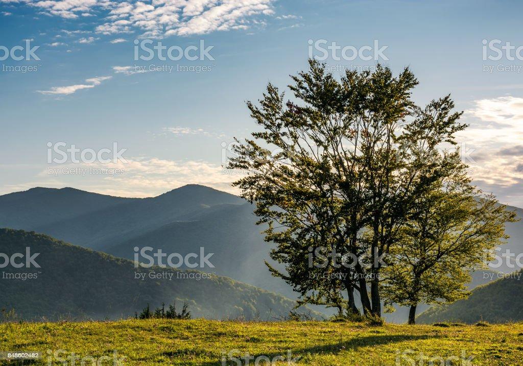 few trees on edge of a hillside in evening light stock photo