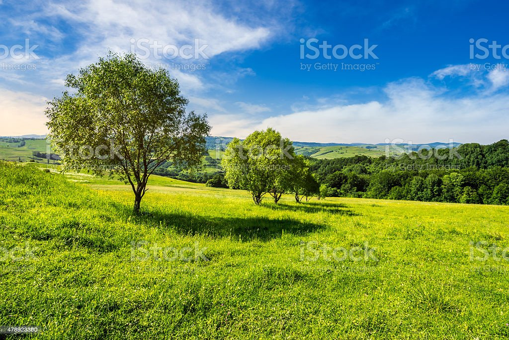 few trees on hillside meadow at sunrise stock photo