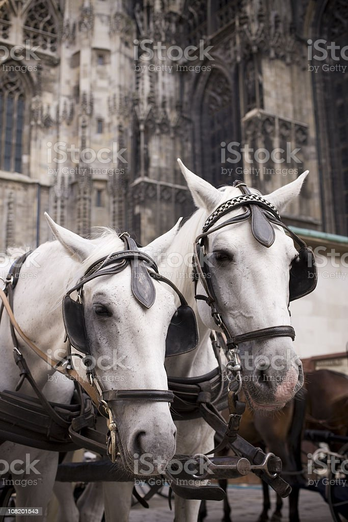 Fiaker Horses stock photo