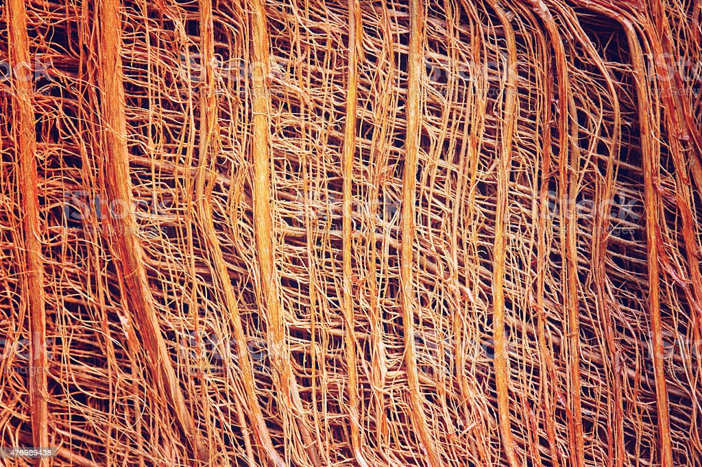 Fiber on coconut tree for pattern background royalty-free stock photo