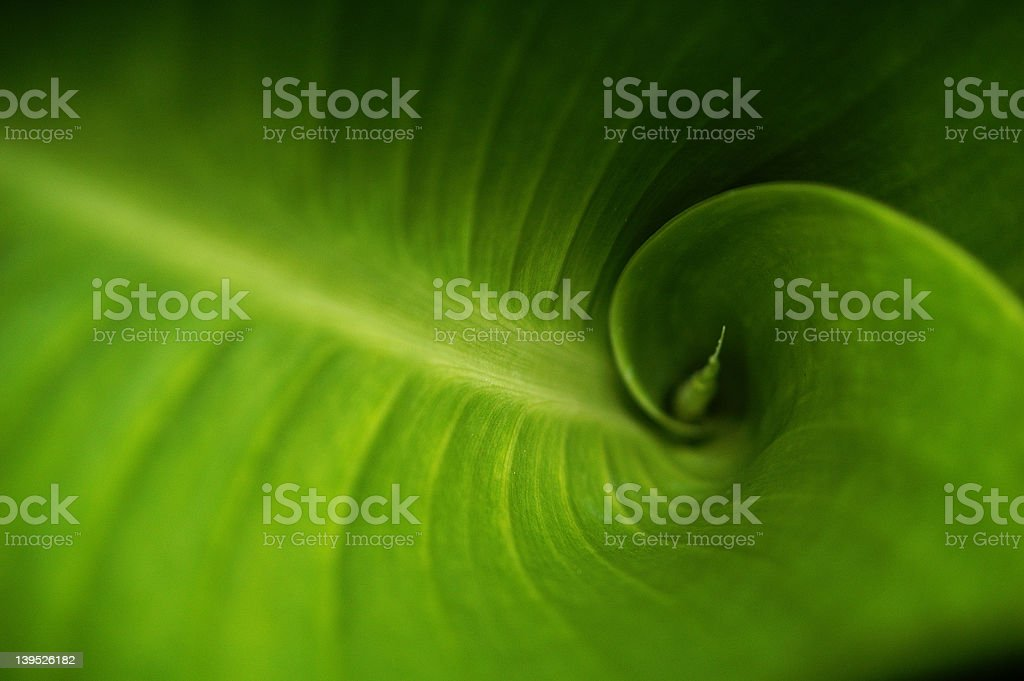 Fibonacci Green stock photo