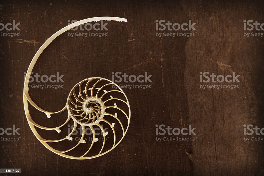 Fibonacci shell royalty-free stock photo