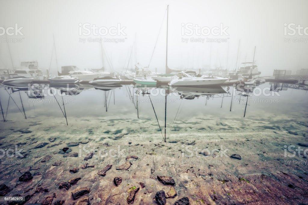 Fiddle Fog stock photo