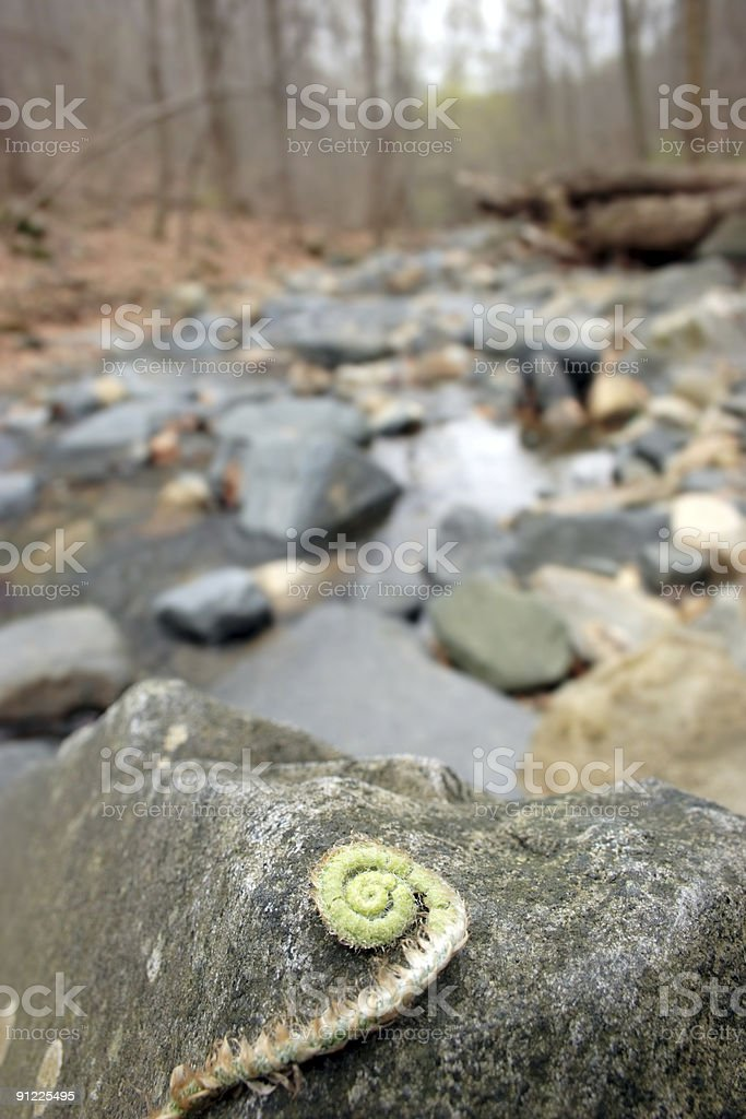 Fiddlehead Fern and River royalty-free stock photo