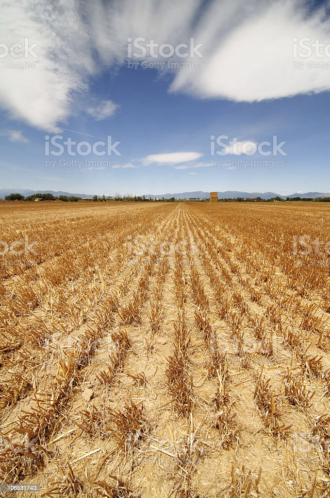 Field after harvest. royalty-free stock photo