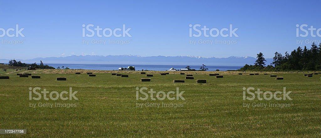 Field After Harvest with Haystacks on San Juan Island, WA stock photo