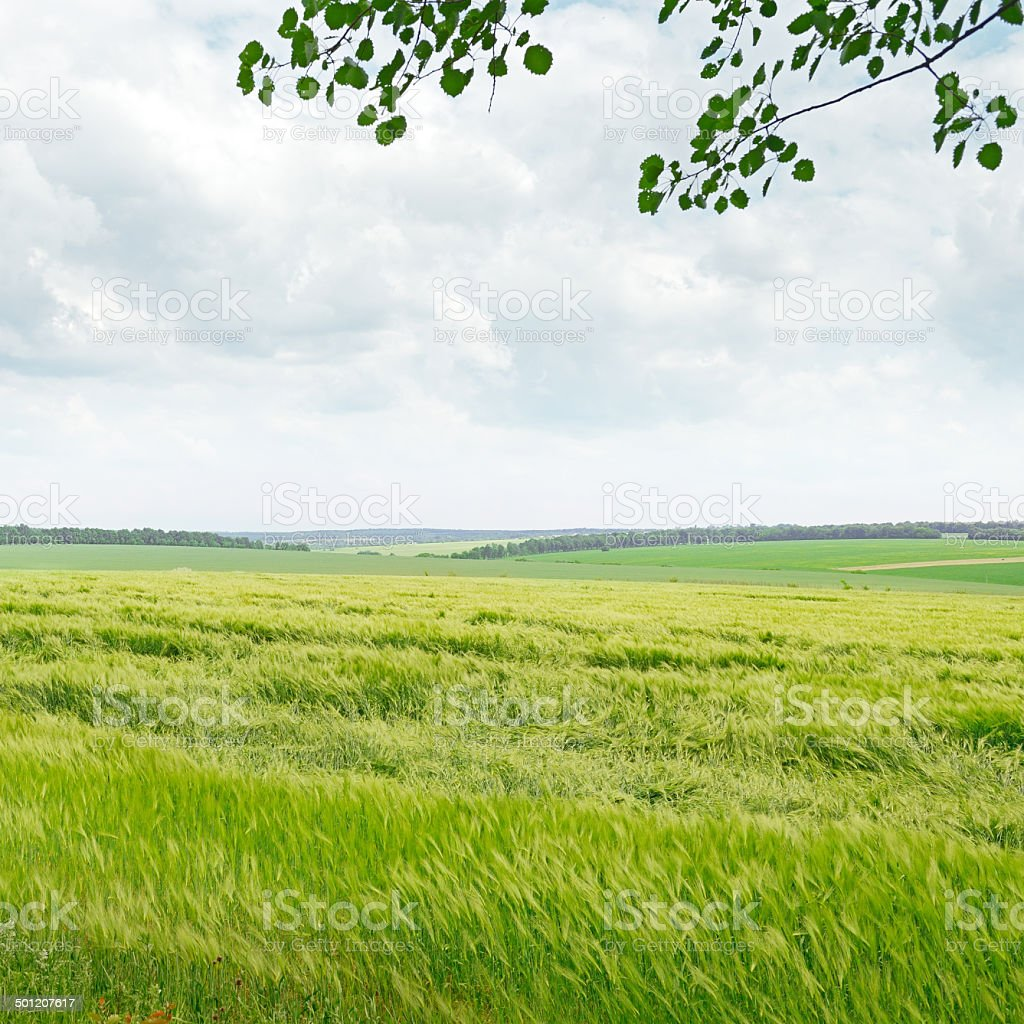 field and blue cloudy sky royalty-free stock photo