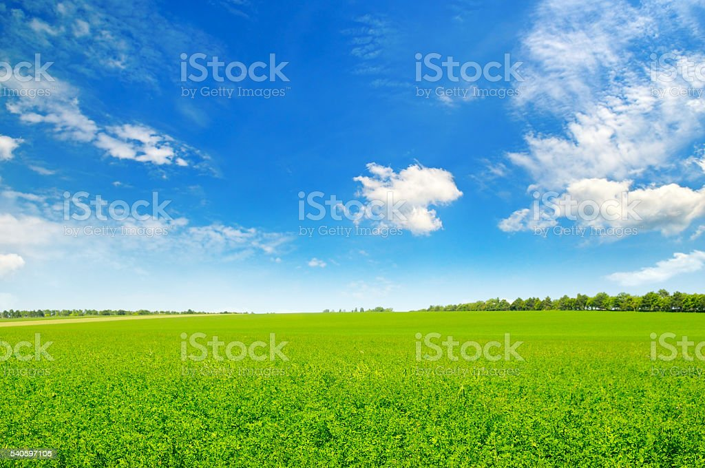 field and blue sky with light clouds stock photo