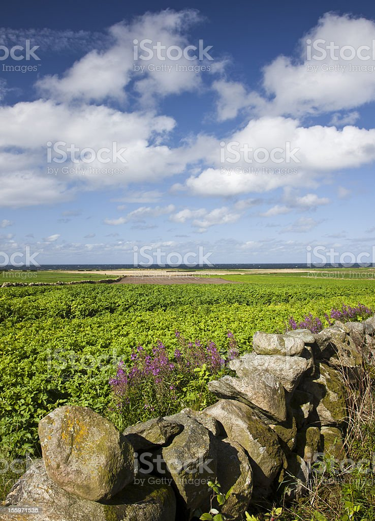 Field and cloudscape royalty-free stock photo