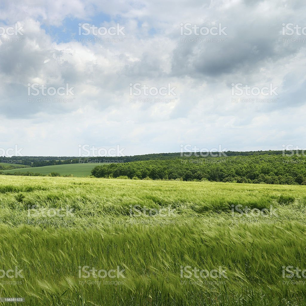 field and cloudy sky royalty-free stock photo