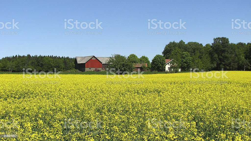 Field and Farm royalty-free stock photo