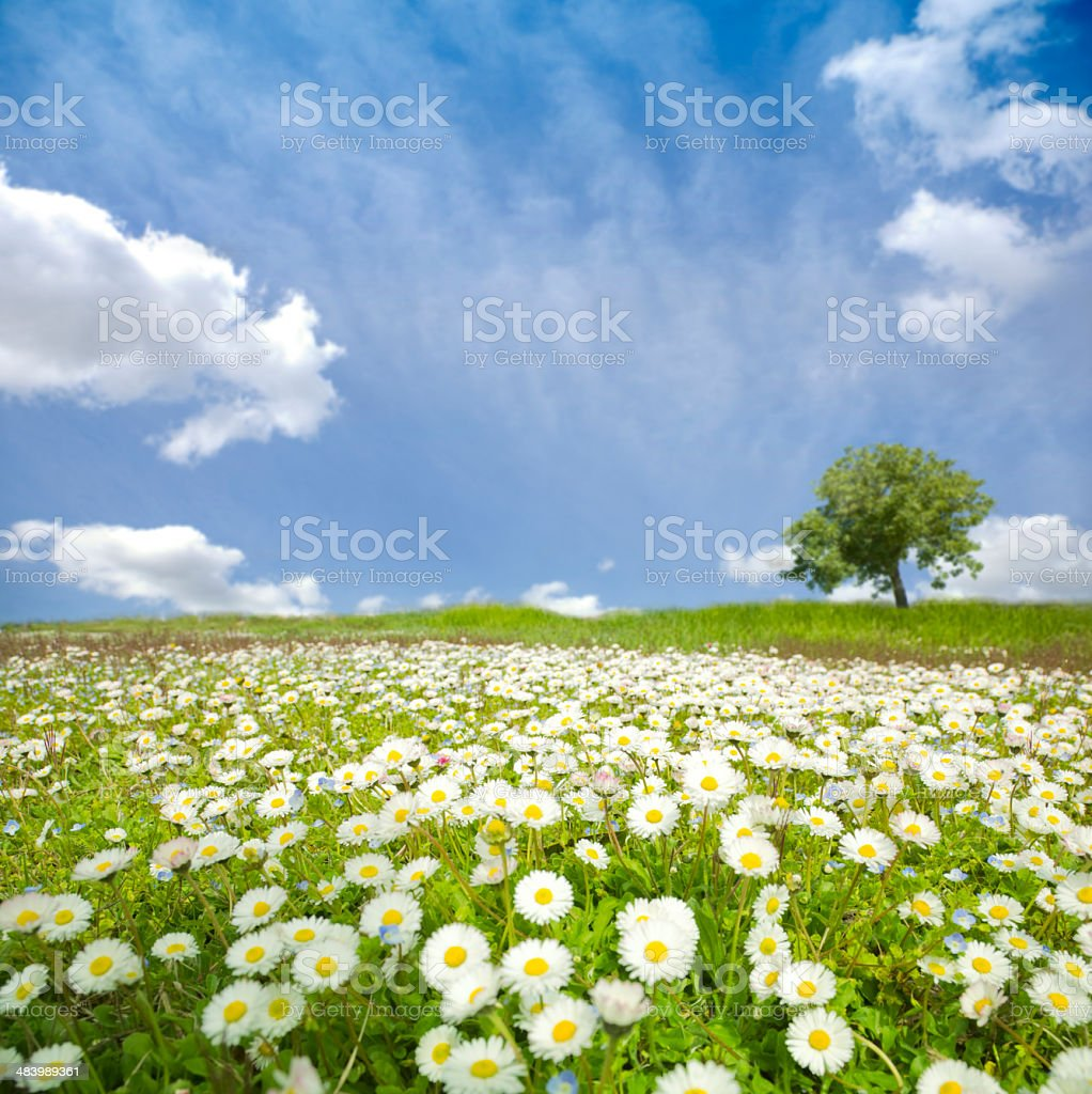 Field and flowers stock photo