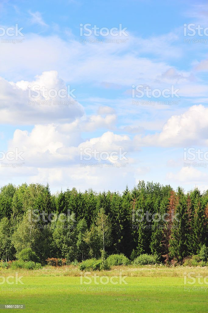 Field and forest royalty-free stock photo