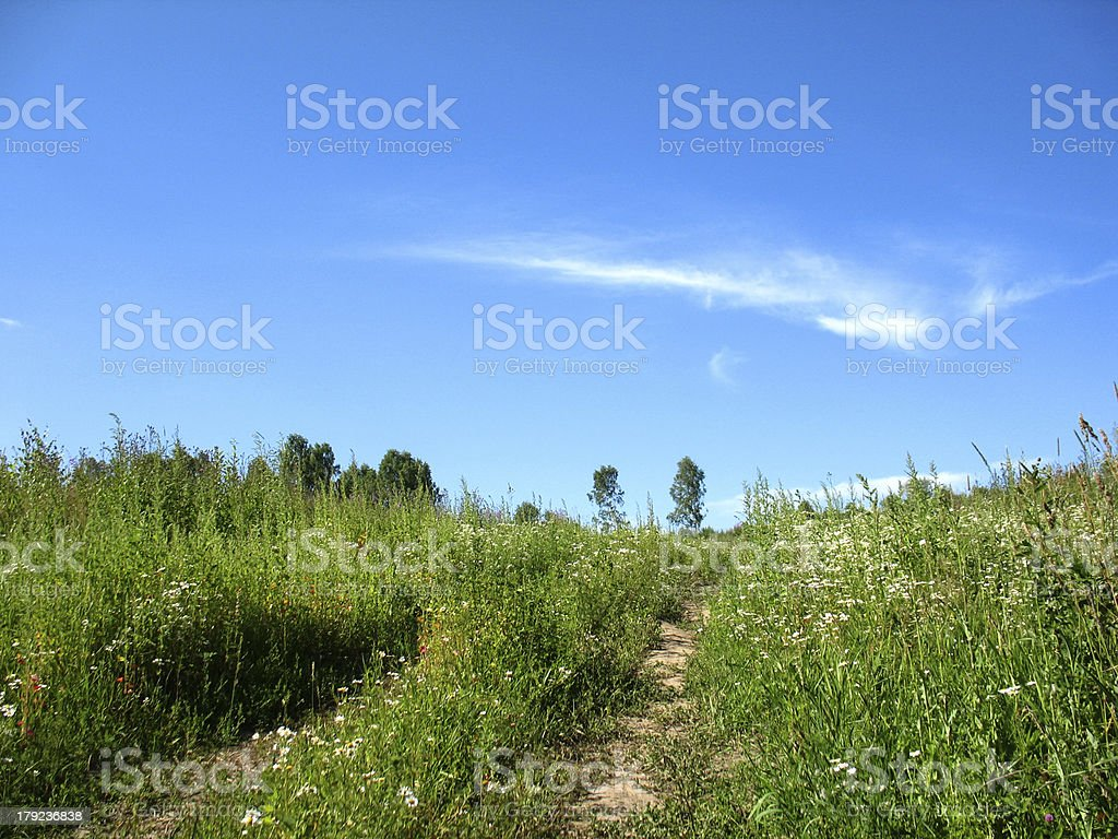 field and green grass royalty-free stock photo