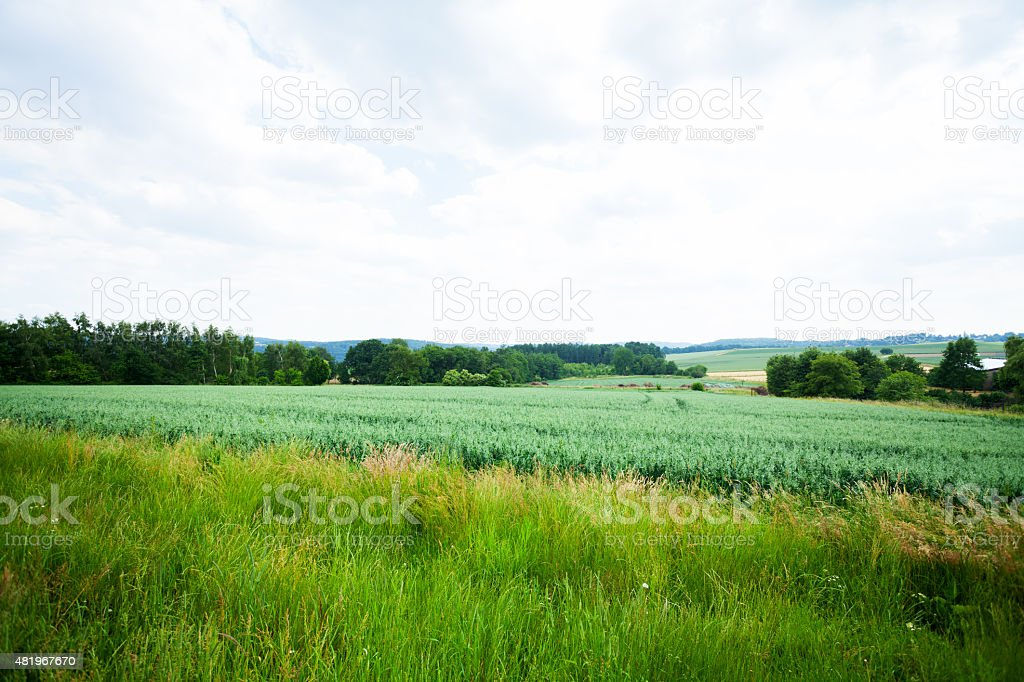 Field and greenery of valley Ruhr stock photo