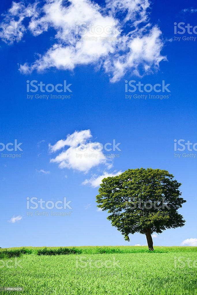 field and lonely tree royalty-free stock photo