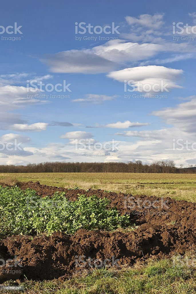 Field and meadow in autumn, blue sky. stock photo