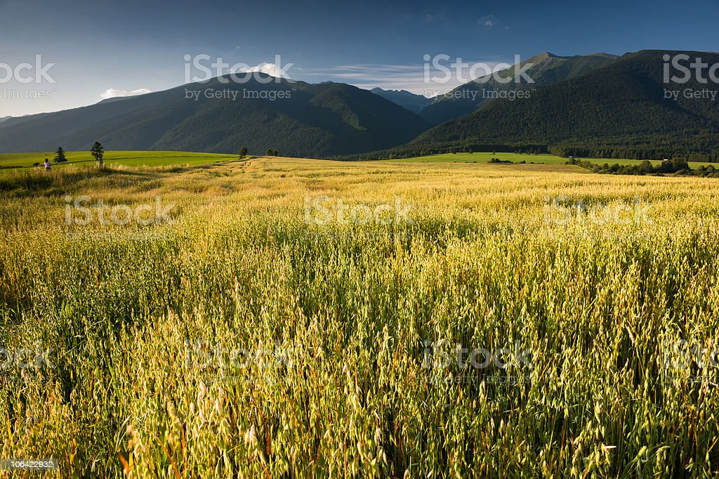 field and mountains stock photo