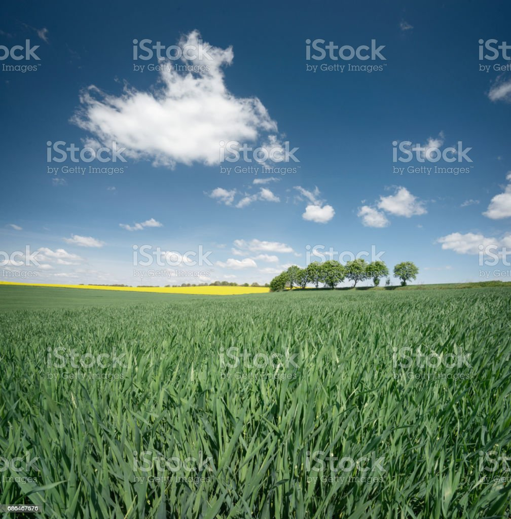 Field and sky. Agricultural landscape in the summer time stock photo