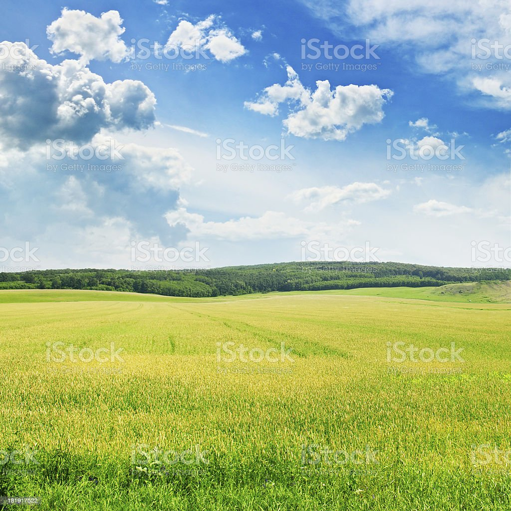 field and  sky royalty-free stock photo