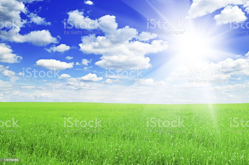 field and sun royalty-free stock photo
