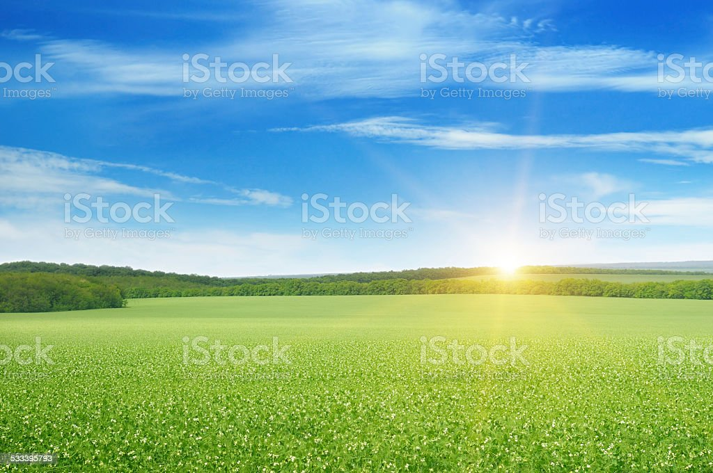 field and sunrise stock photo