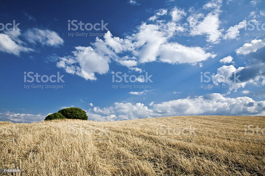 Field and Tree royalty-free stock photo