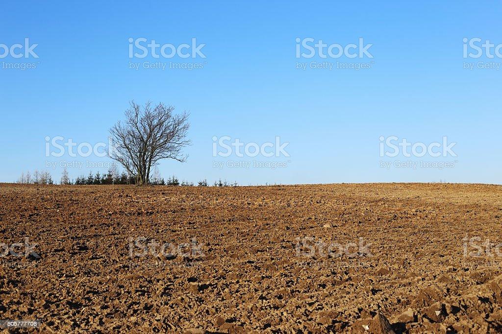 field and tree royalty-free stock photo